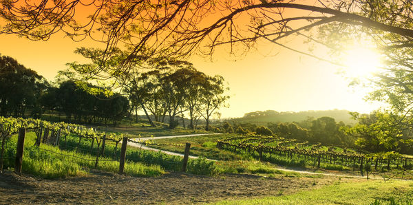 Visit the Barossa Valley from Adelaide